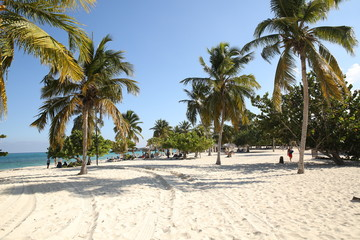palm trees and white sand on a tropical beach