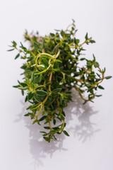 essential oil of thyme on a white background