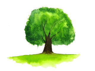 watercolor tree.isolated white background.