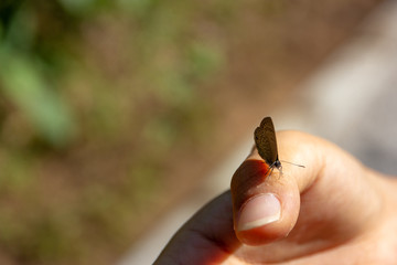 gossamer-winged butterfly on hand of  asian woman in the forest