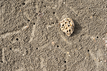 Texture of sand beach with ghost crab holes and stone