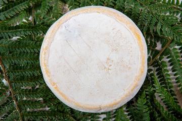 delicious mountain french cheese reblochon, Savoie product
