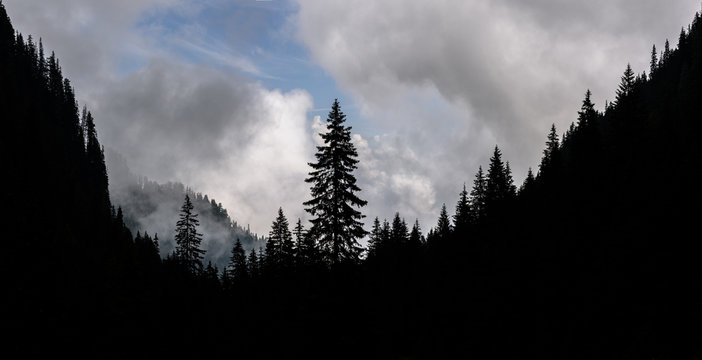 High mountain landscape whit trees silhouette in the Southern Carpathians of Romania. Foggy mountain landscape.