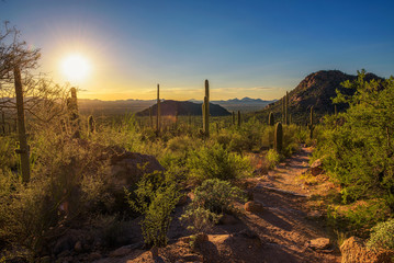 Sunset over hiking trail in Saguaro National Park in Arizona Wall mural