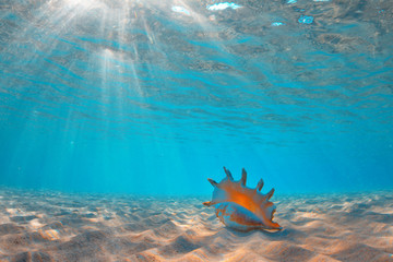 Sea shell underwater at sand, water surface with sunbeams