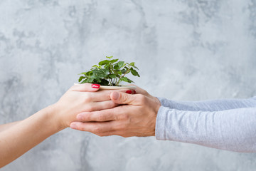 male and female hands holding flowerpot with green plant. environmental protection and ecology
