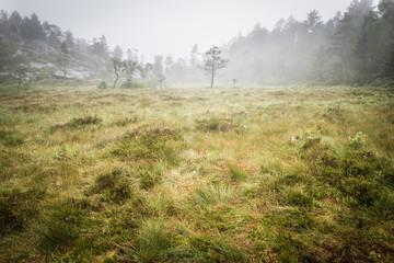 bog swapm walkway to Trolltunga Norway