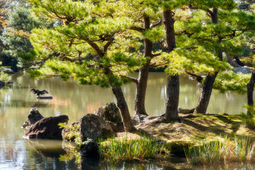 Back lit pine trees in the morning on a small rocky island at the lake surrounding the Golden Pavilion, a beautiful zen garden in Kyoto, Japan.
