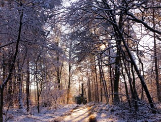 Foret d'hiver