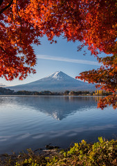 Wall Murals Mount Fuji, Autumn in Mt. Fuji, Japan - Lake Kawaguchiko , Colorful Autumn Season and Mountain Fuji with morning sunrise and red leaves at lake Kawaguchiko, Japan.