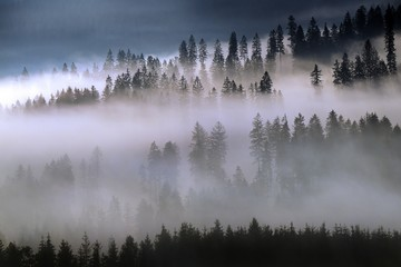 Wall Murals Morning with fog Beskid Forest