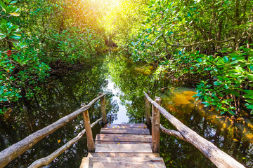 Poster Zanzibar Mangrove forest at Jozani Chwaka Bay National Park, Zanzibar, Tanzania