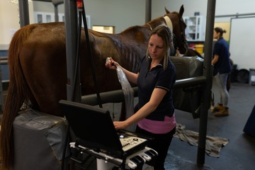 Female surgeon examining a horse in hospital