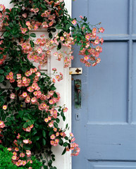 Blooming flowers at wooden house