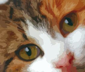 Gatto domestico, disegno illustrativo