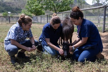 Medical teams feeding grass a young horse in the farm