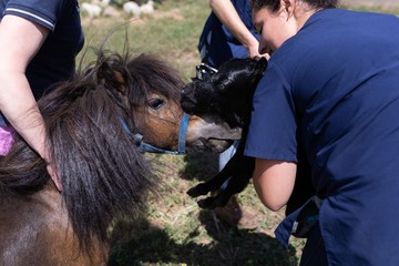Medical teams holding a young horse in the farm