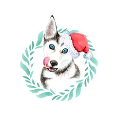 Christmas portrait of a Siberian Husky breed dog in a Santa hat and a wreath. Isolated on white background.