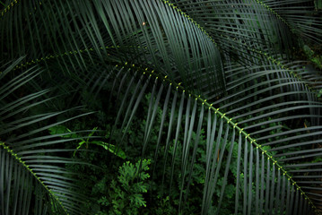 Tropical Fronds Wall mural