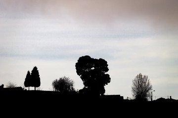 Trees Silhouettes Background