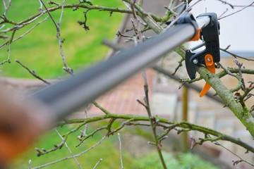 Kappen eines Apfelbaum-Astes mit der Schneidgiraffe bei der Baumpflege