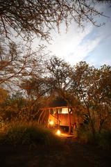 Mosetlha Bush Camp im Madikwe Wildreservat in Südafrika