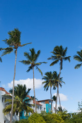 Coconut palm tree background with blue sky