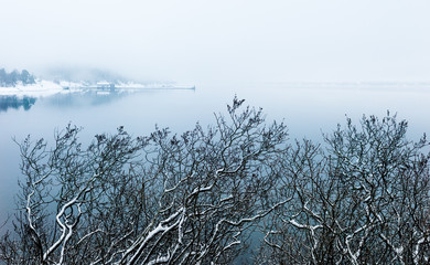 Snow-clad twigs in front of  the misty Oslofjord