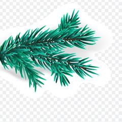 Christmas spruce branch isolated on white background.  isolated on transparant background