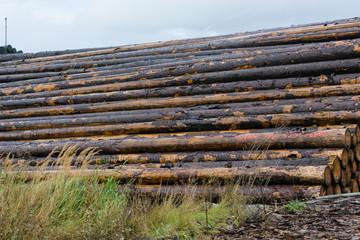 GestapelStacked wood on a wood storage yard