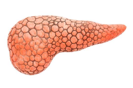 Pancreas Human Organ, 3D rendering
