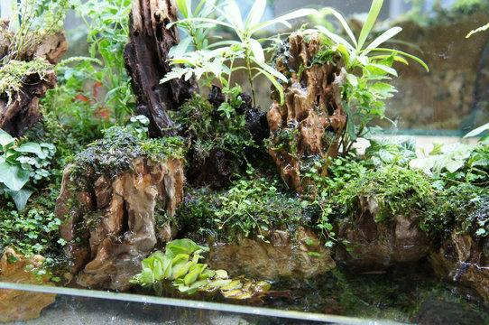 Aquascape design in small glass aquarium displayed for public.