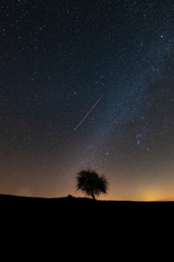 stars and lonely tree