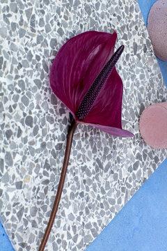 Close up of anthurium flower