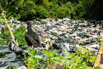 Un avvolotio e un mare di spazzatura, Capurganà, Colombia