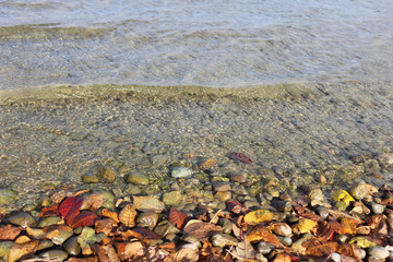 Autumn leaves in water.