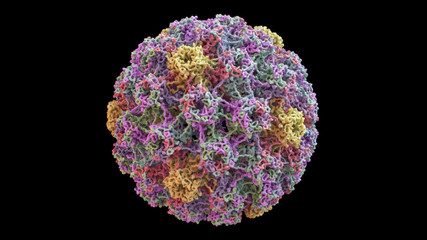 3D CG rendered image of scientifically accurate Human Papilloma Virus (HPV) Capsid Structure based on PDB : 3J6R (surface style)
