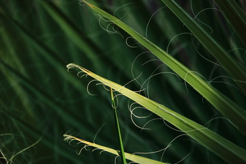 Fraying palm fronds