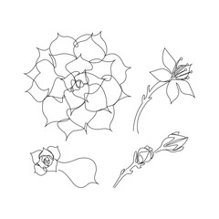 Set of continuous line succulents. Blossoming echeveria, beautiful succulent flower. One line drawing concept. Vector illustration isolated on white background.