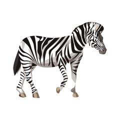 Zebra wild animal