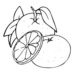 Vector hand drawn outlined mandarin. Whole fruit and slices. Contour sketch isolated on white background. Citrus design elements. Can be used for cards, invitations, gift wrap, print, scrap, menu.