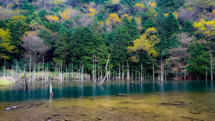 古代風の森林と池