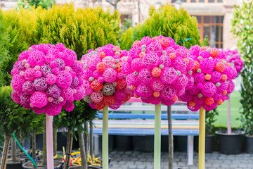 Garden and street decoration - colorful trees made of rattan balls.
