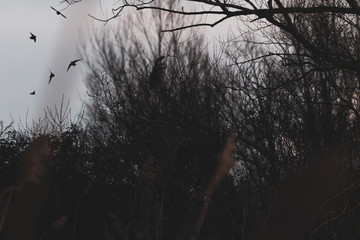 Flying birds silhouettes in the midst of plants and trees