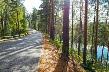 Forest road through the Northern forest. The landscape is coniferous in the wild.