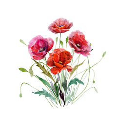 Bouquet of poppy flowers. Hand drawn watercolor illustration. Magnificent red colors floral elements for design isolated on white background. For wedding invitations, greeting cards, datings.