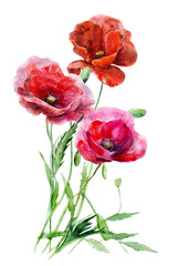 Three red poppy flowers against the background of bound  stalks. Hand drawn watercolor floral  illustration. Elements for design isolated on white. For wedding invitations, greeting cards, holidays.