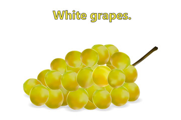 Realistic 3d bunch of white grapes, vine, with shadows on a white background. Vector illustration.