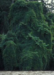 Rainforest cruise trip through Taman Negara National Park