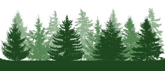 Summer green forest, silhouette of spruces. Vector illustration.